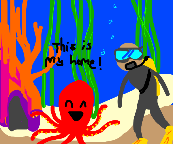 Octopus shows you their house.
