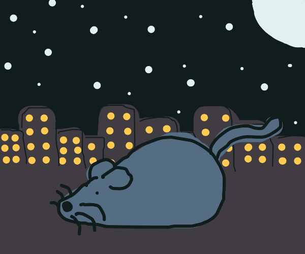 Gray mouse at night