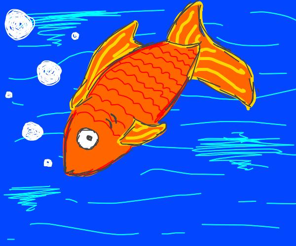 Goldeen type fish(i forgot the name)
