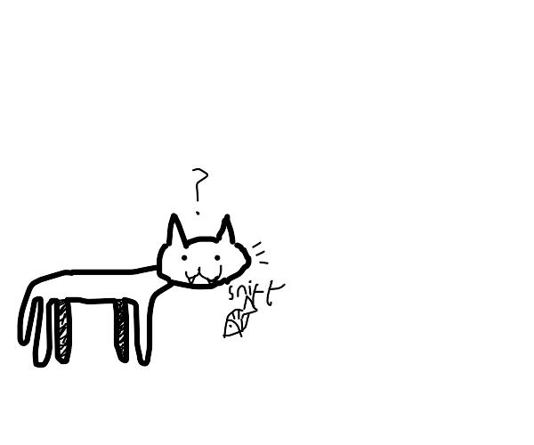 white curious kitten
