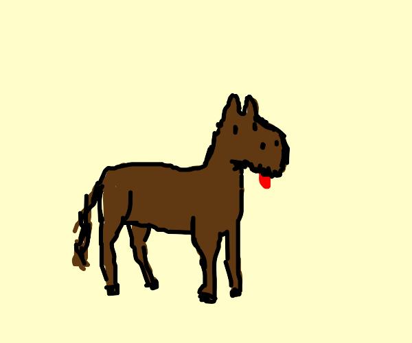 Horse dog hybrid