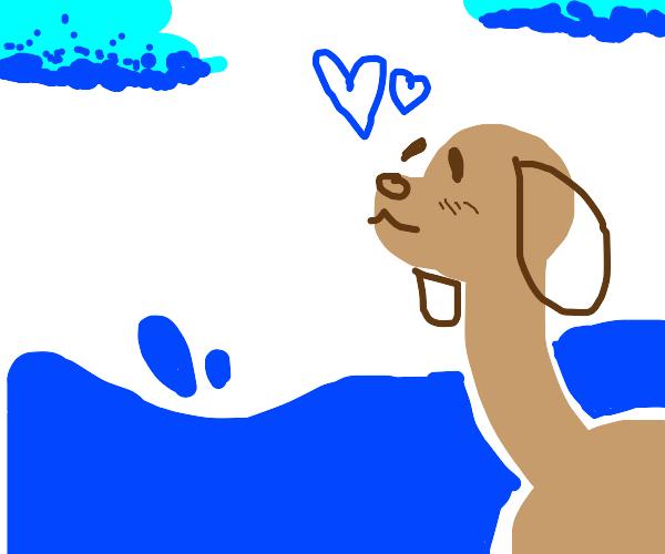 Dog loves the ocean