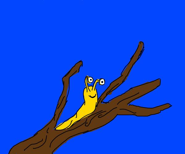 slug doing slug things