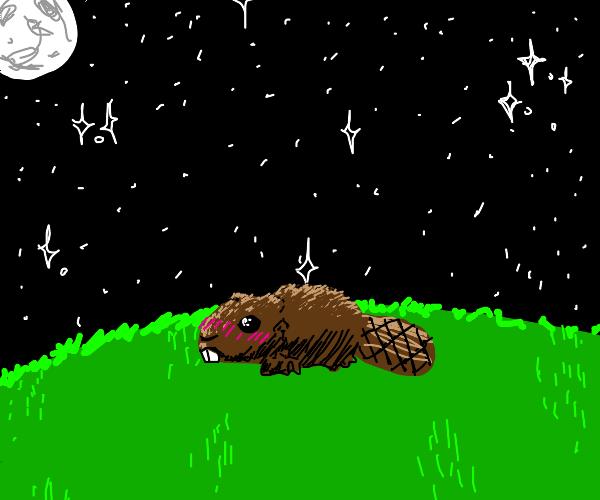 Blushing beaver at night