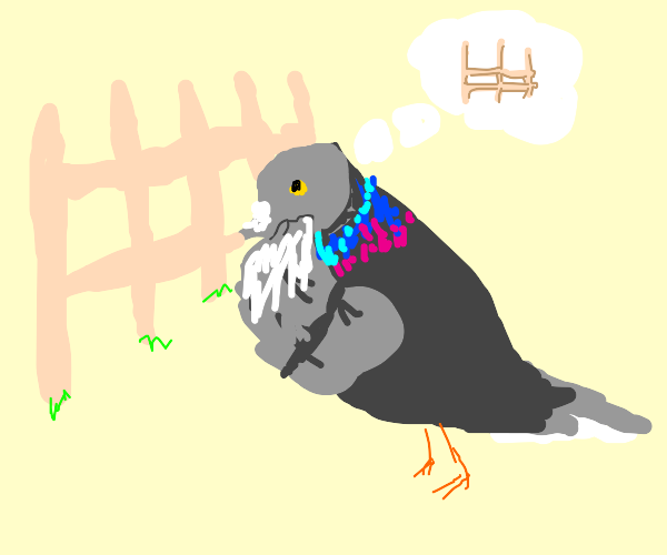 pigeon looks at fence