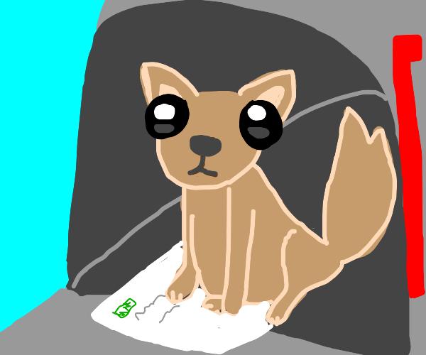 dog in a mailbox