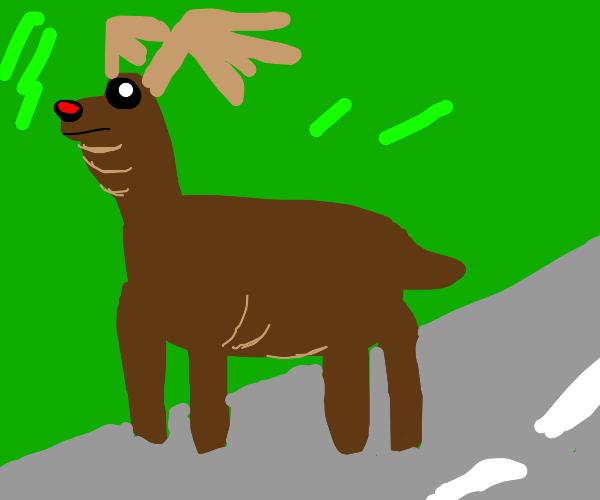 overweight deer