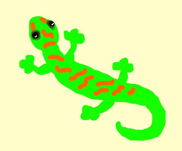 A gecko!!!!!!!!!