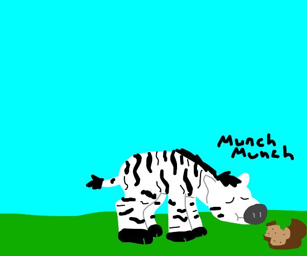 Zebra eating Beard