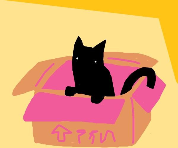 cat in