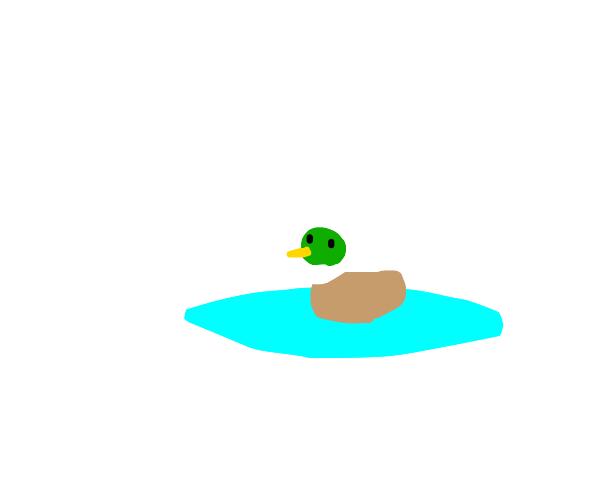 A pond with a duck