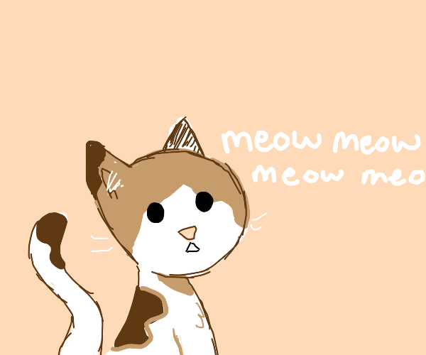 Brown and white cat meowing