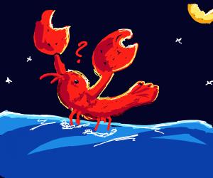 confused lobster