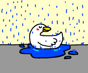 Duck is still happy with a puddle.