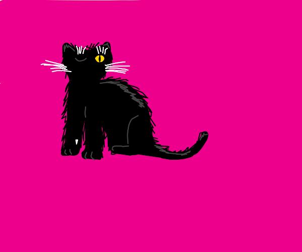 black cat winking pink background