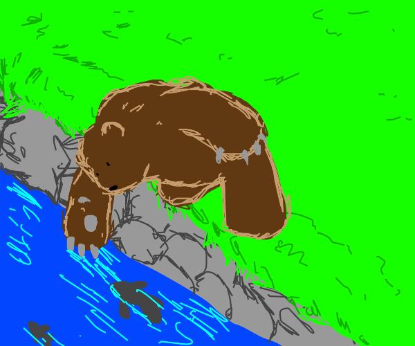 Bear hunting fish