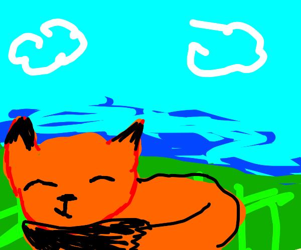 Fox sleeping in grassy field