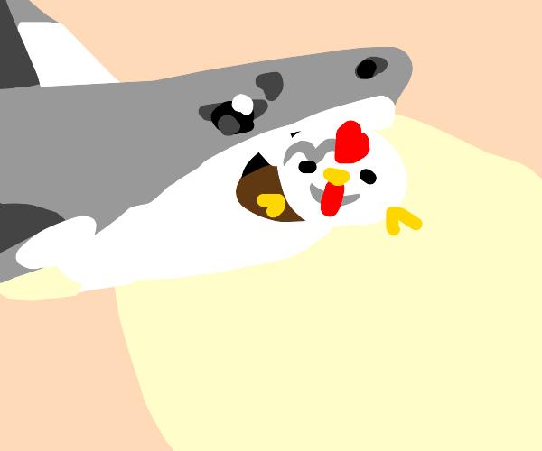 shark eating a chicken