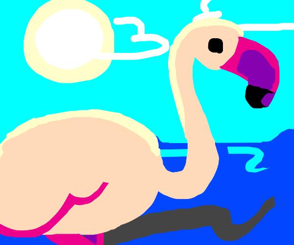 flamingo at the sea