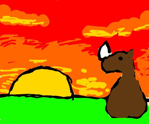 Brown Rhino stares into the sun