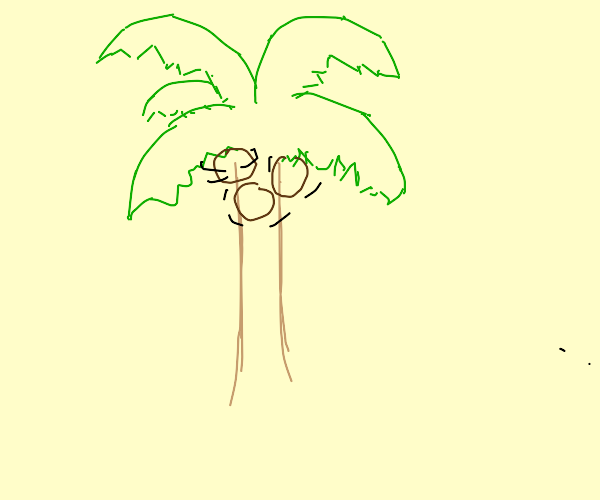 palm tree spins his own coconuts