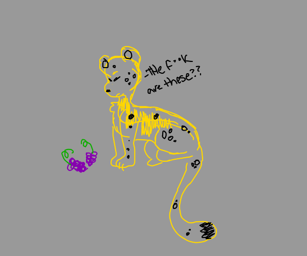 leopard not wanting to eat grapes
