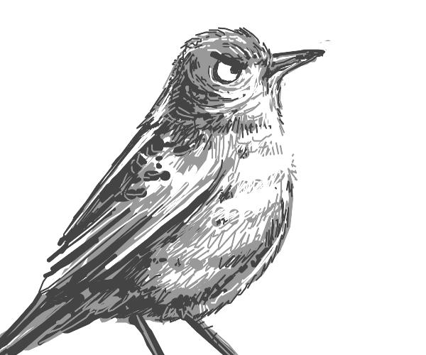 gray angry bird