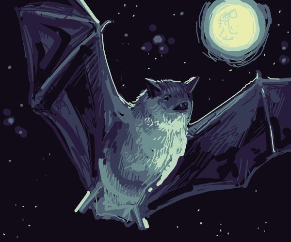 Bats in da niggt