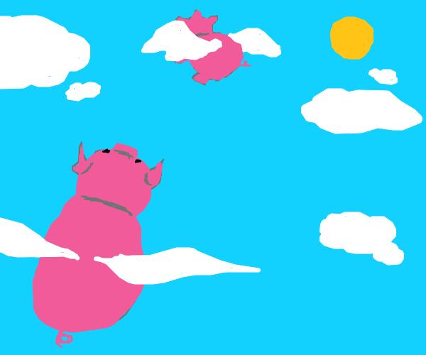 Pigs finally flew