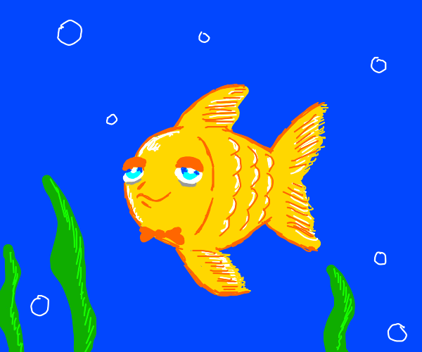goldfish wearing a bow