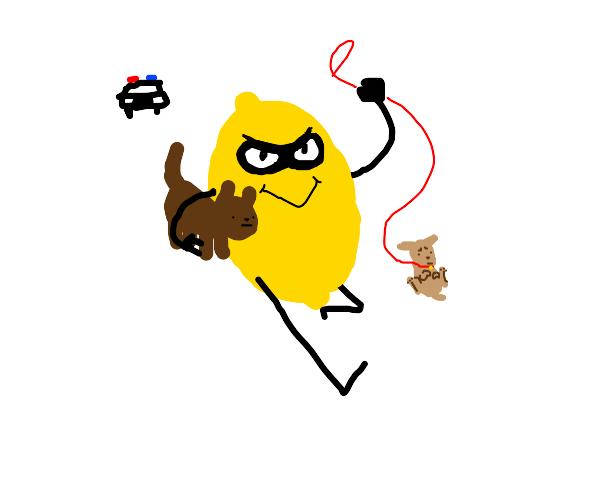 A Lemon Stealing Dogs