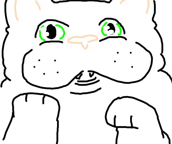Chub cat