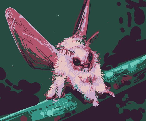 moth hooker