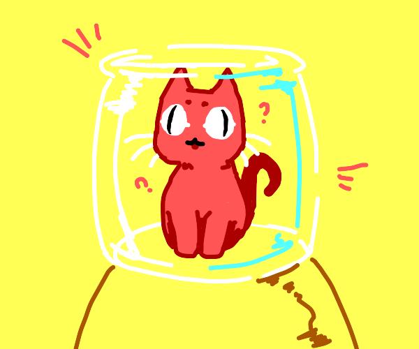 Cat inside a jar