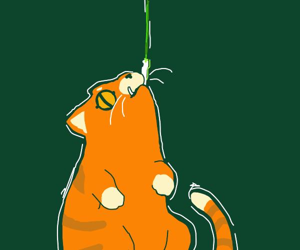 orange cat on a hook