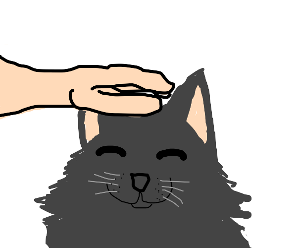 Big fluff cat loves a head scratch