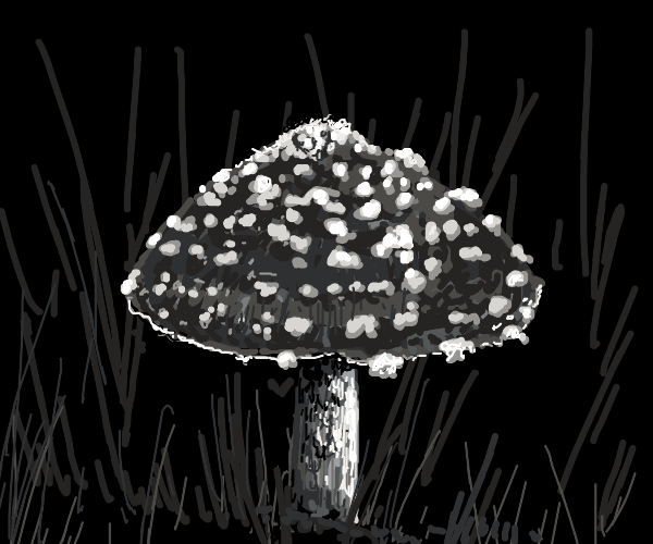 A fly agaric mushroom in a field
