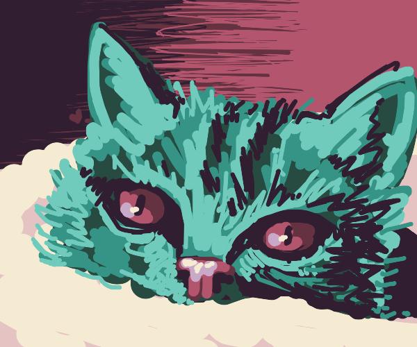 Samoh the Turquoise Kitten