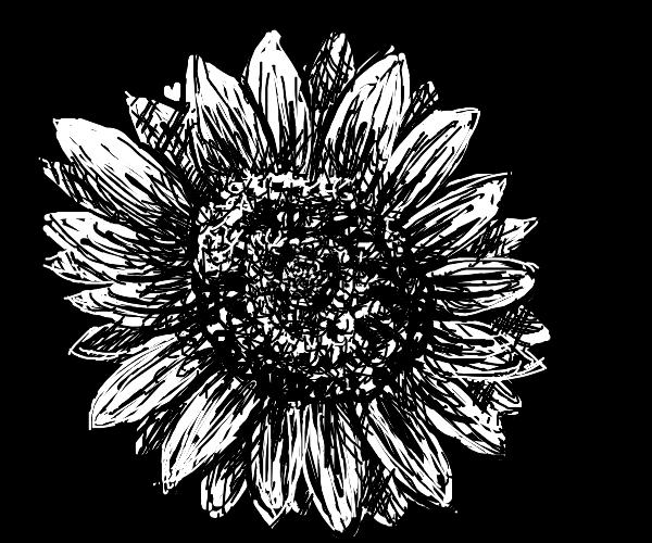 Noir sunflower