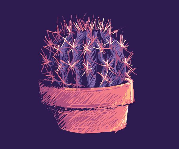Cactus in a terra cotta pot
