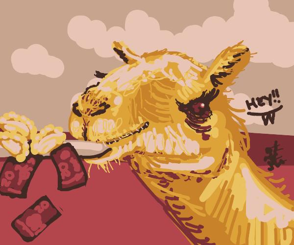 Camel selling pierogies scams man
