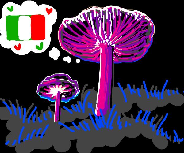 mushroom is a simp for italy