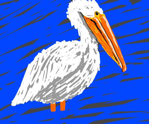 Pelican =)