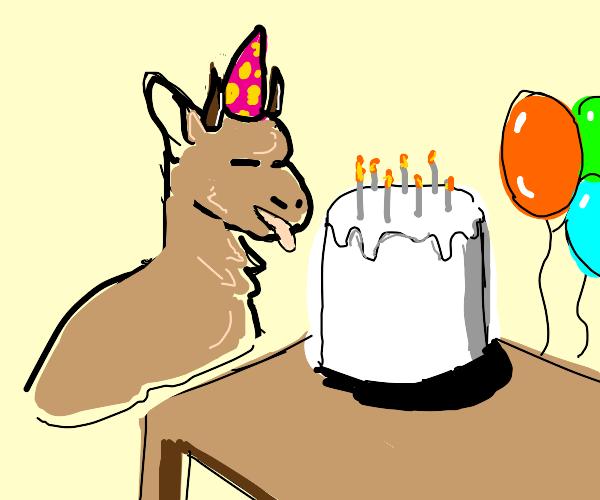 Goat's birthday party!