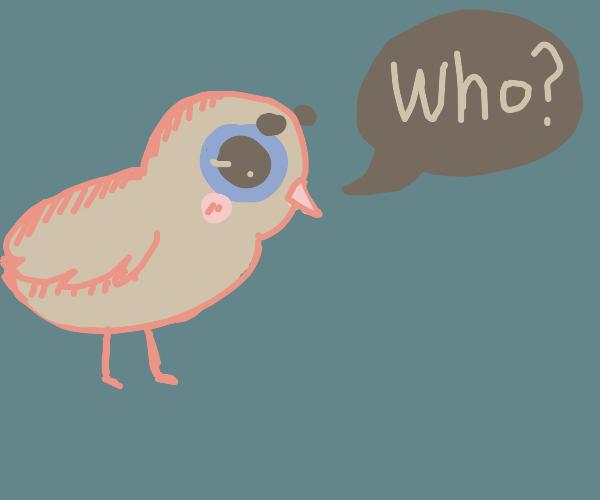 """a dirty orange bird asks you """" who? """""""