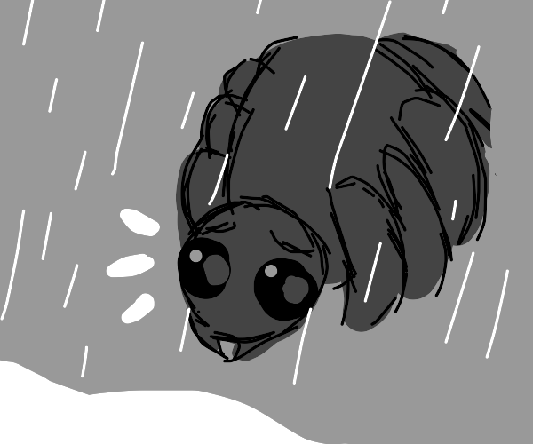 Spider is sad because it's raining