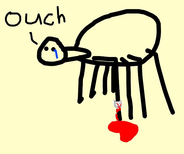 spider hurts its leg