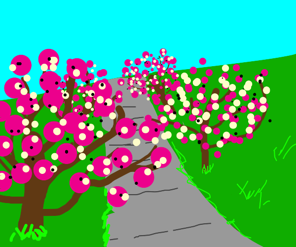 Nice cherry blossom park