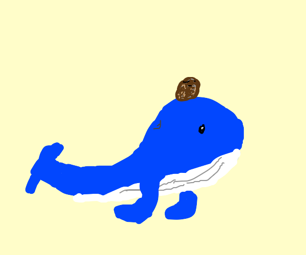 coconut on a whale
