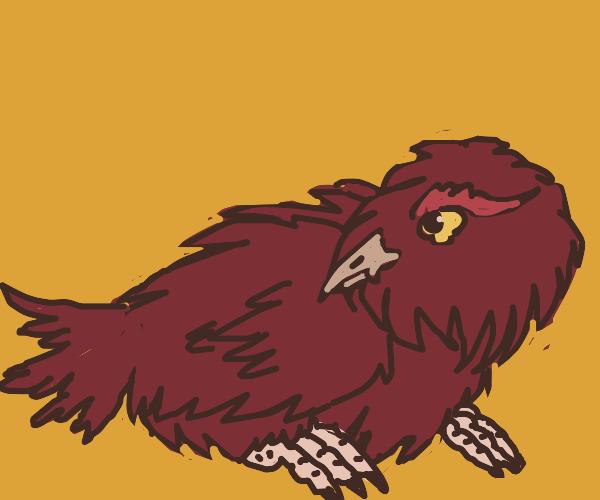 A very floofy chicken